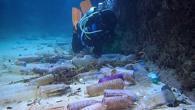 Потепление убьет 17% всех морских обитателей уже до конца столетия