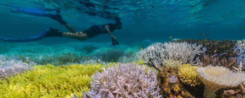 Подводная красота на Гугл картах