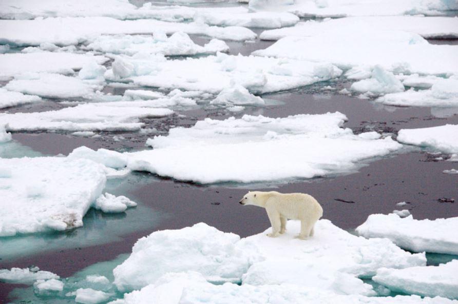 Медведь на тающей льдине